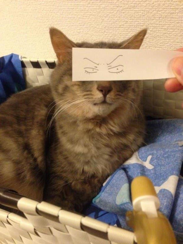 gatos ojos caricatura (10)