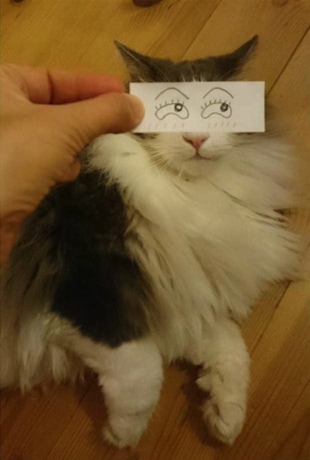 gatos ojos caricatura (12)