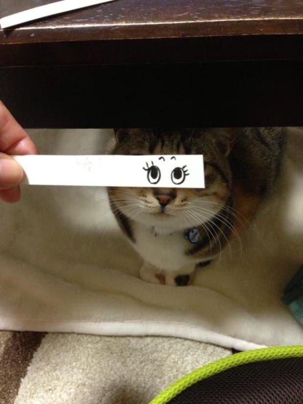 gatos ojos caricatura (13)
