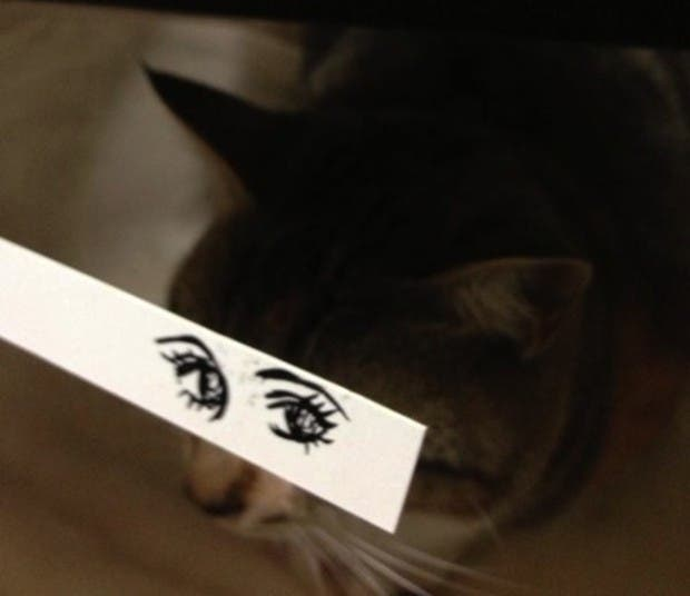 gatos ojos caricatura (14)
