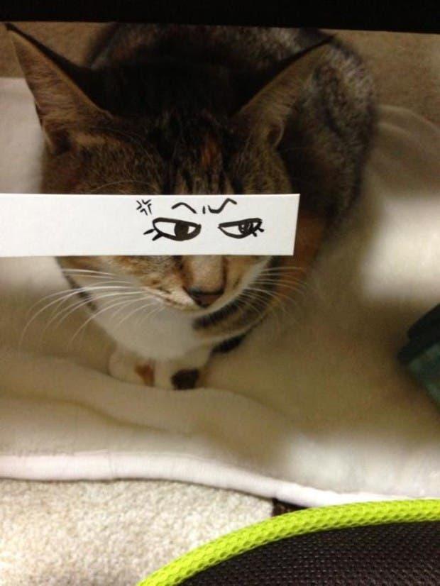 gatos ojos caricatura (15)