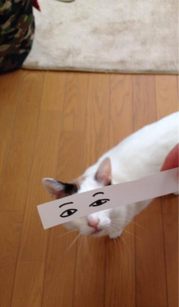 gatos ojos caricatura (16)
