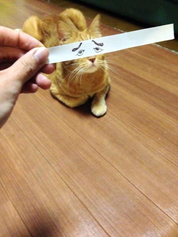 gatos ojos caricatura (2)