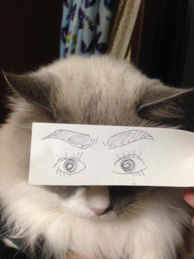 gatos ojos caricatura (3)