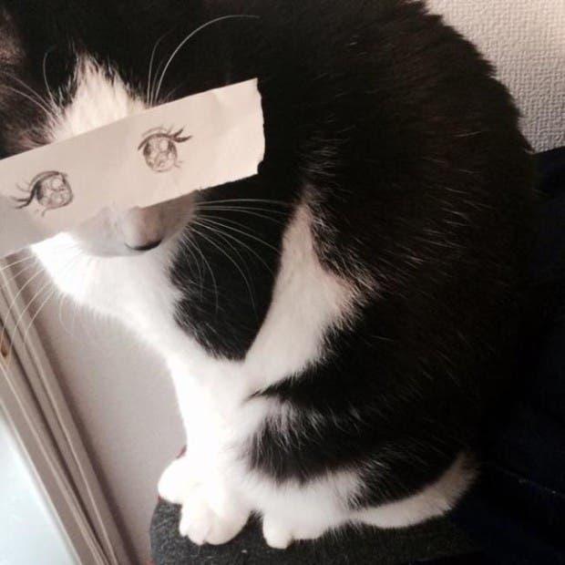 gatos ojos caricatura (4)