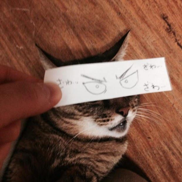 gatos ojos caricatura (6)