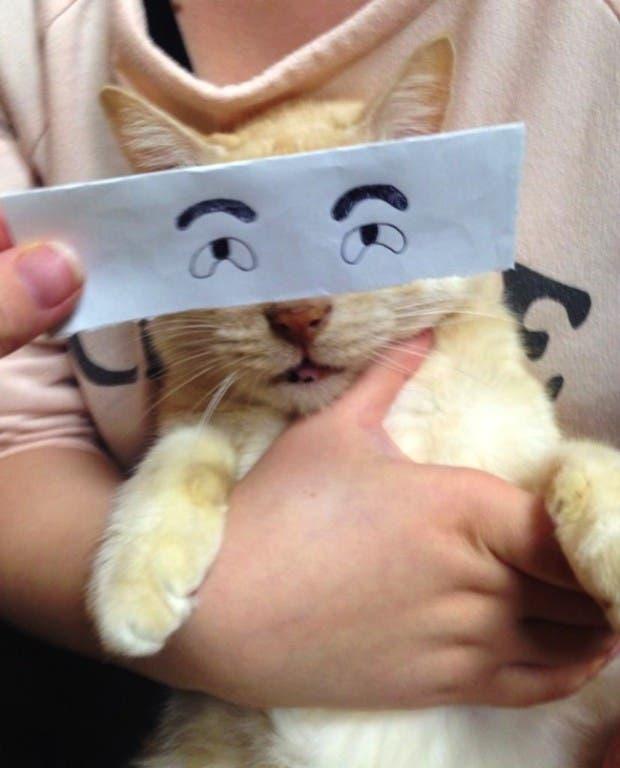 gatos ojos caricatura (7)