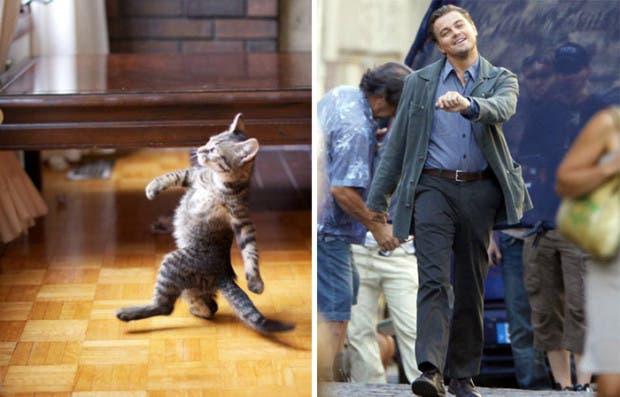 gatos que parecen celebridades (11)
