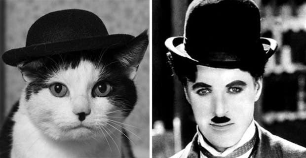gatos que parecen celebridades (14)