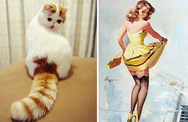 gatos que parecen celebridades (15)