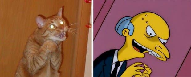 gatos que parecen celebridades (17)