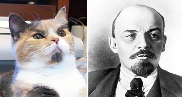 gatos que parecen celebridades (18)
