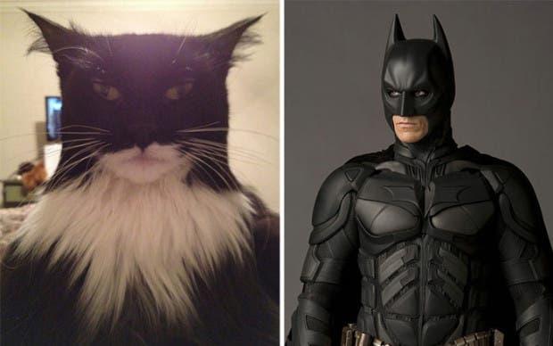 gatos que parecen celebridades (2)