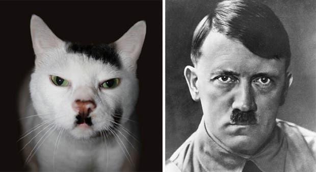 gatos que parecen celebridades (3)