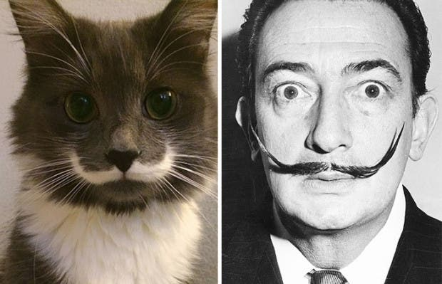 gatos que parecen celebridades (4)