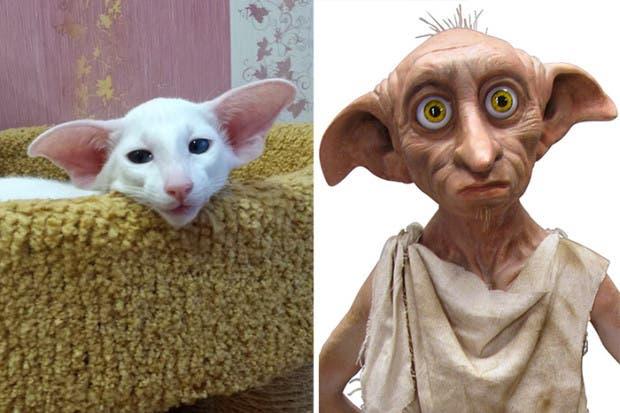 gatos que parecen celebridades (6)