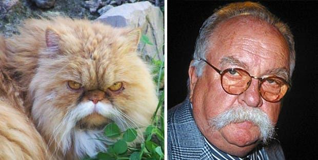 gatos que parecen celebridades (9)