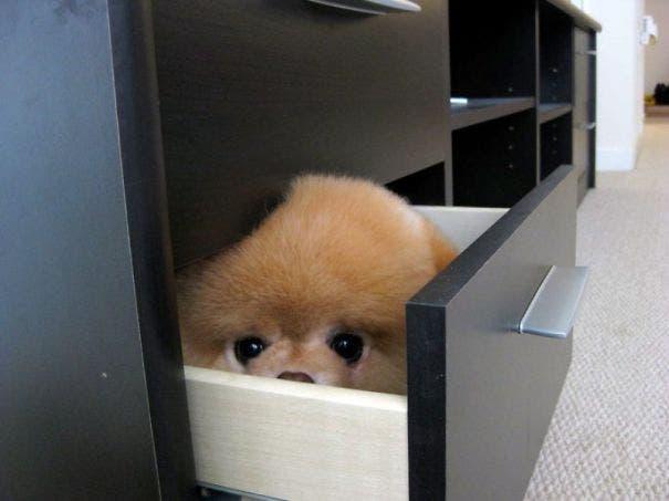 hiding-ninja-funny-dogs-51__605