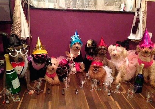 joven-vive-con-12-perros