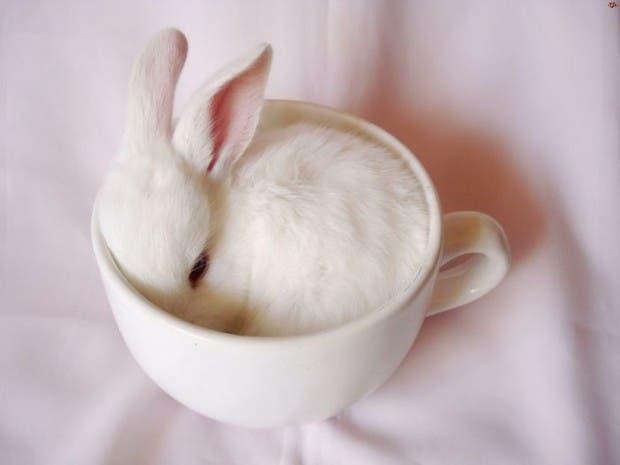 lindos animales tazas (7)