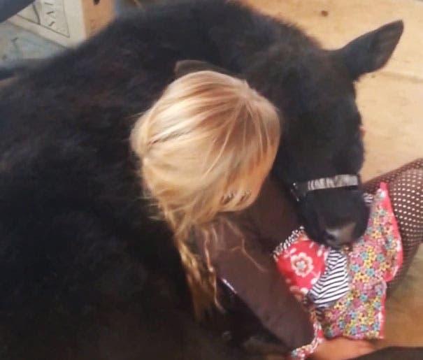 little-girl-pet-calf-cow-nap-breanna-izzy-7