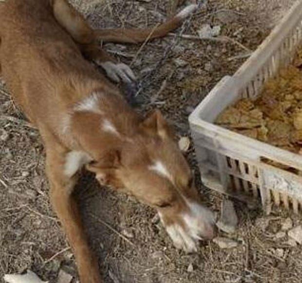 maltrato animal acusado (6)