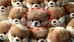 mascotas-escondidas-portada