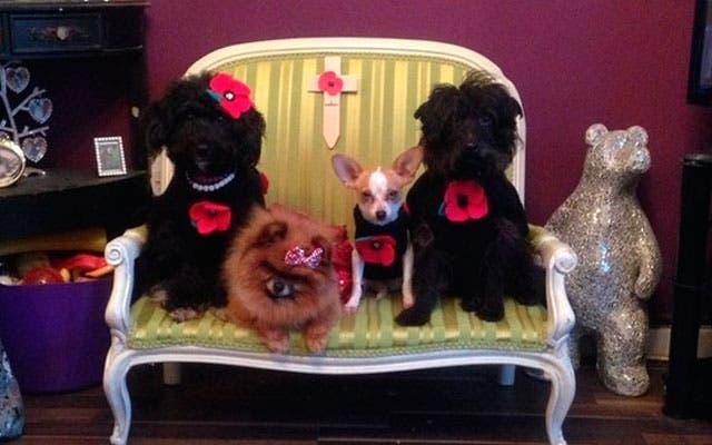 mujer-acosada-vive-con-12-perros