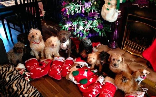 mujer-vive-con-doce-perros