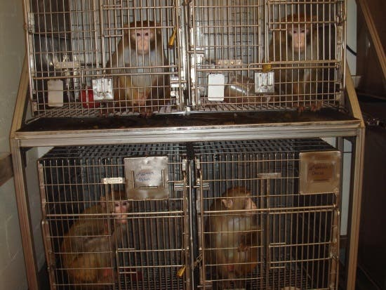 four cages of monkeys