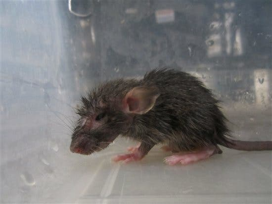 peores empresas animales (5)
