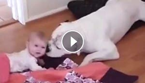 perrita-pitbull-bebe-play