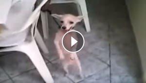 perro-bailando-ritmo