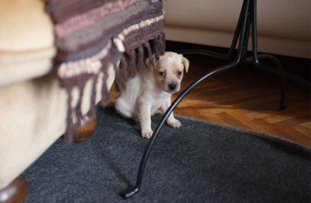 perro-fotos-crecimiento