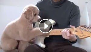 perro-guitarra-play