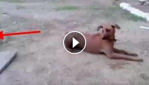 perro-salva-persona-play
