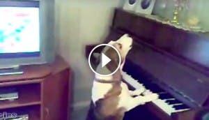 perro-toca-piano-play
