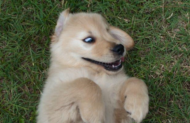 perros-1
