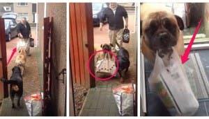 perros-ayuda-bolsas