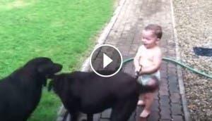 perros-bebe-manguera-play