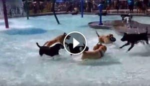 piscina-fiesta-perros-play