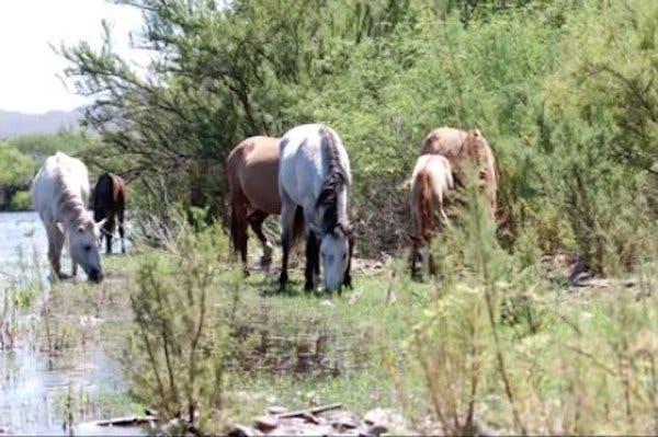 01-wild-horse-rescue