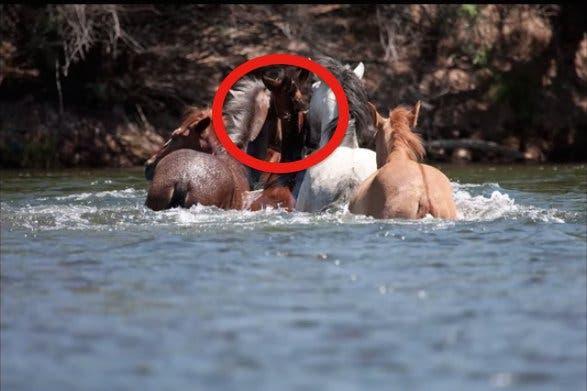 06-wild-horse-rescue