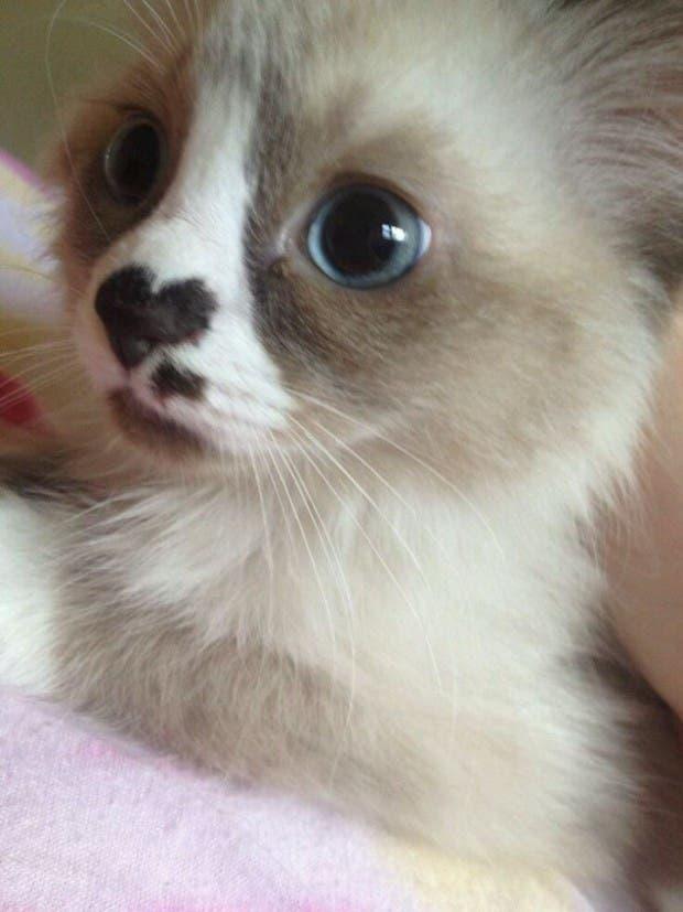gato corazón