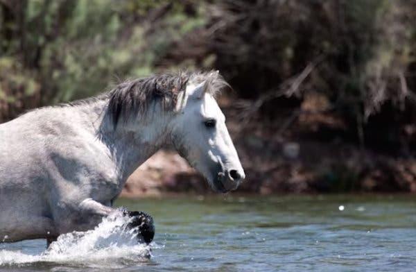 13-wild-horse-rescue