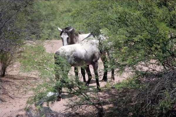 14-wild-horse-rescue