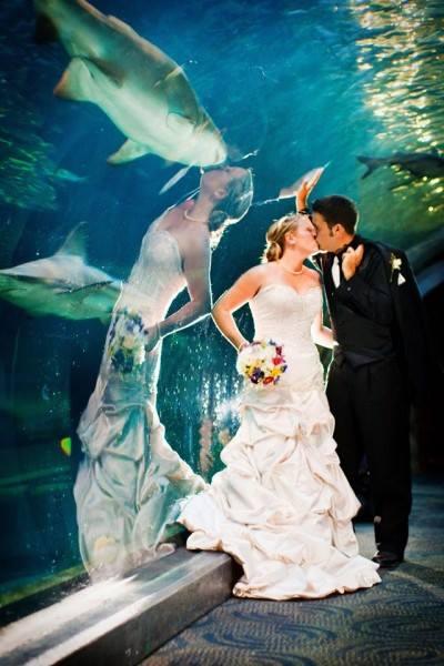 boda acuario