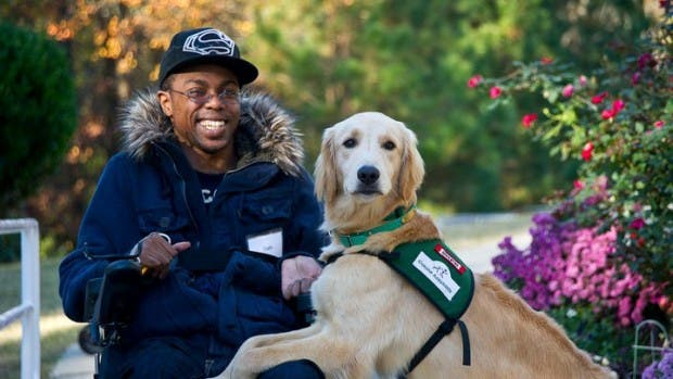 5service-dogs