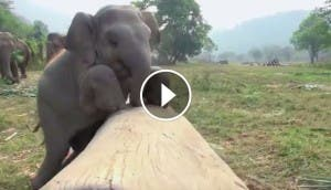 bebe-elefante-feliz