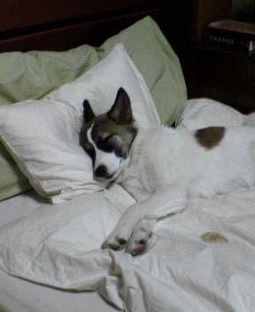 dormir en cuartos frios (5)